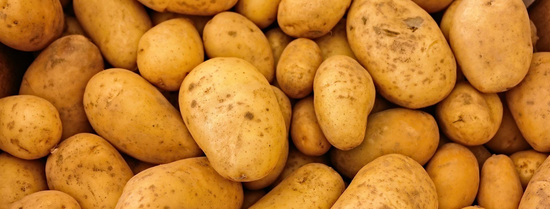 Gendyrk dine kartofler